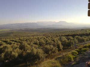 Olive groves and fracking