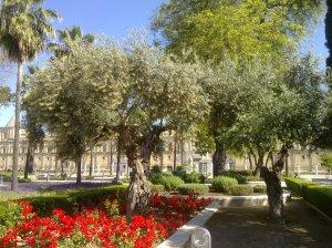 Olivas del Parlamento Andaluz